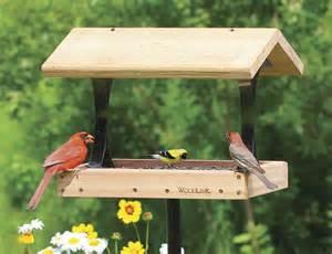 What Is A Bird Feeder Top 10 Best Bird Feeders Design For Me