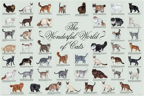 cat breed breed poster