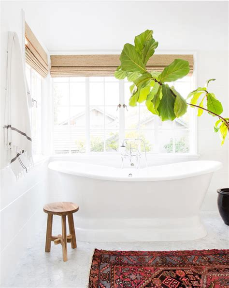 bathroom in farsi the beauty of a fiddle leaf fig jones design company