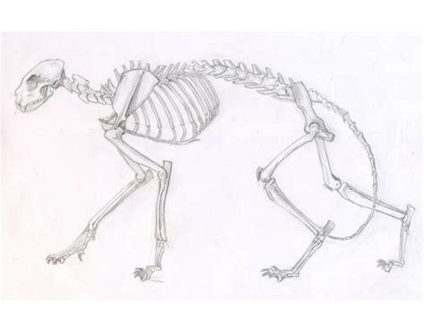cat skeleton diagram cat skeleton anatomy purposegames