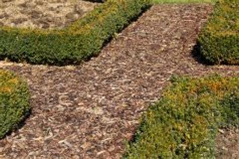 Pilze Im Garten Durch Rindenmulch by Pilze Anbauen 187 Diese Sorten K 246 Nnen Sie Im Eigenen Garten