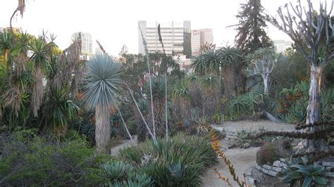 Ucla Botanical Gardens Mildred E Mathias Botanical Garden