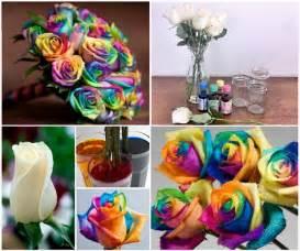 diys with food coloring wonderful diy beautiful rainbow roses