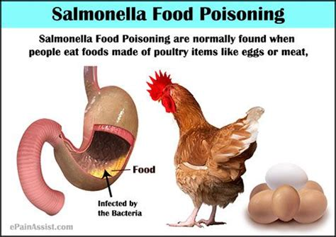 Food Poisoning Yellow Stool by Best 25 Salmonella Symptoms Ideas Only On