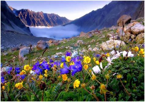Flower Mountain mountain flowers pixdaus