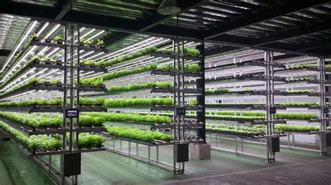 Apartment Building Plans by Seoul Getting Its First Ever Vertical Farm Business