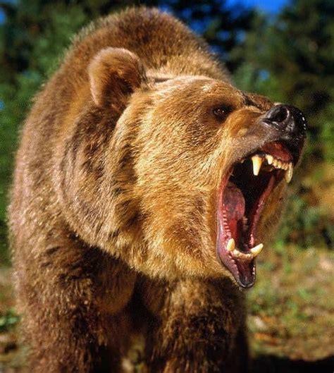 inspiration tattoo innisfail grizzly bear arctic animals birds pinterest