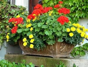 Hot colored geranium and marigolds