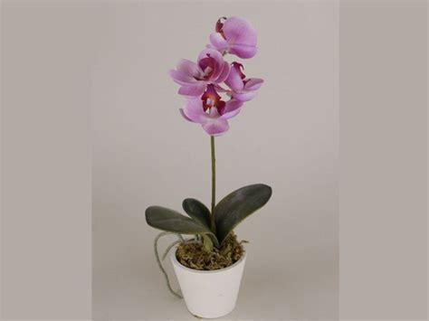 come coltivare orchidee in vaso oltre 1000 coltivare orchidee su cura orchidea
