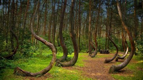 the crooked forest of gryfino poland 10 best real places to visit that look like fantasy lands