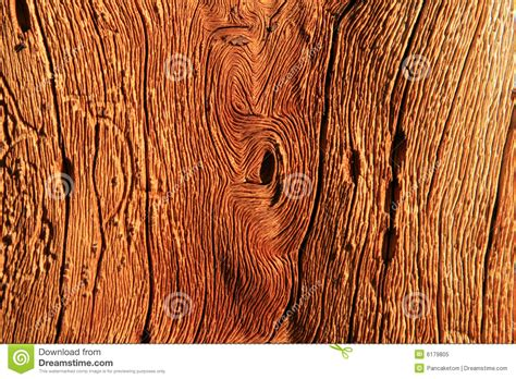 wood grain royalty  stock photo image