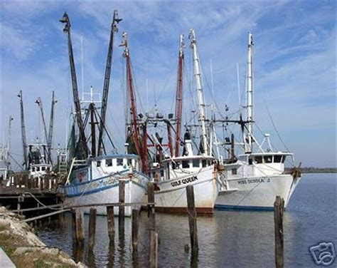 party boat fishing apalachicola fl 194 best trawlers images on pinterest fishing boats