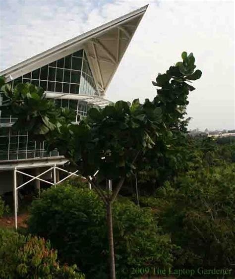 Botanical Garden Putrajaya Botanical Garden Putrajaya Staircases Picture Of
