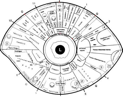 printable iridology eye chart free iridology eye chart downloads large iridology chart