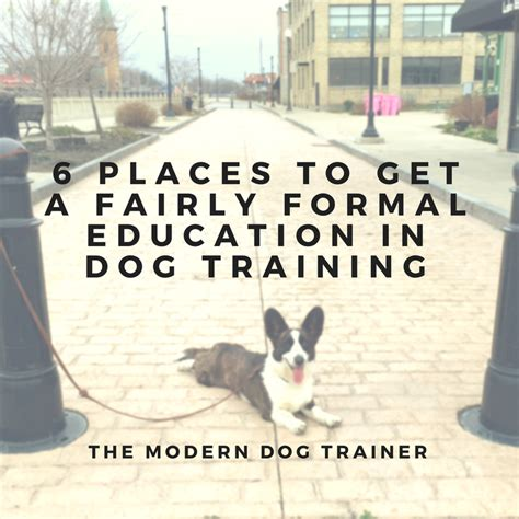 best place to get a puppy 6 places to get a fairly formal education in the modern trainer