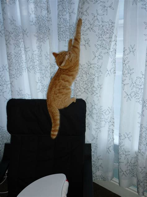 cat curtains gentle paws dog and cat training unleash your pet s