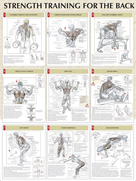 workout diagram back strengthening exercises back strengthening exercises