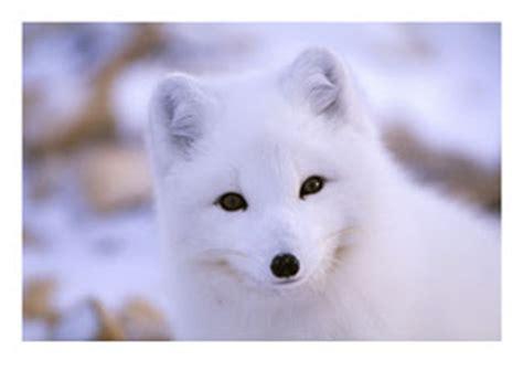 imagenes de animales hermosos del mundo los animales mas hermosos del mundo im 225 genes taringa