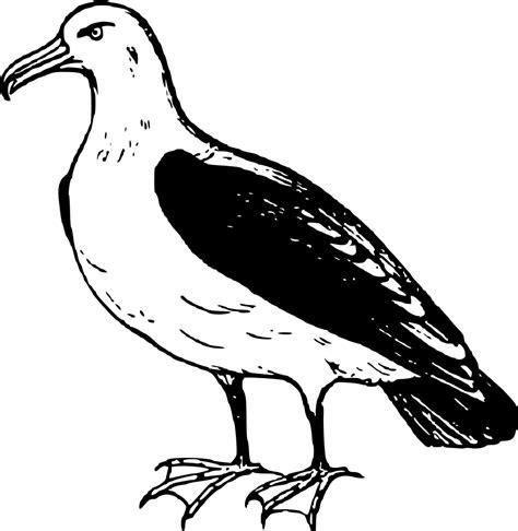 drawings of a sea bird clipart best onlinelabels clip art albatross