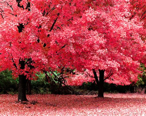 1280x1024 pink trees desktop pc and mac wallpaper