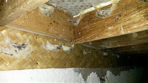 jual b max pelapis papan sirip rumah walet 15cm x 1m