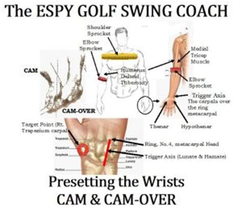 anatomy of a golf swing golfer s key target muscles espy golf swing coach