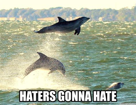 Dolphin Meme - dolphin haters