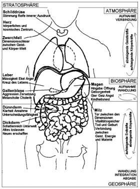 der menschliche körper innere organe organe im k 246 rper