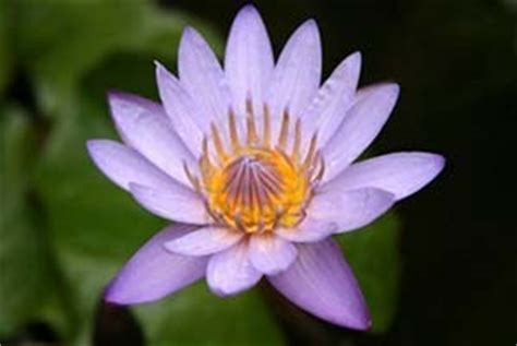 fiore di ren significato fiore di ren significato fare di una mosca