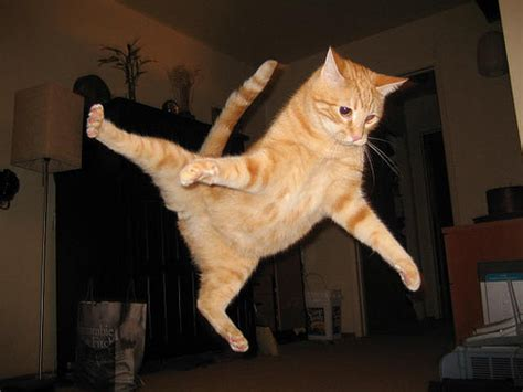 How To Stop A Cat From Jumping On Furniture by Awesome Pictures Of Jumping Cats