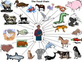 Food web and a food chain