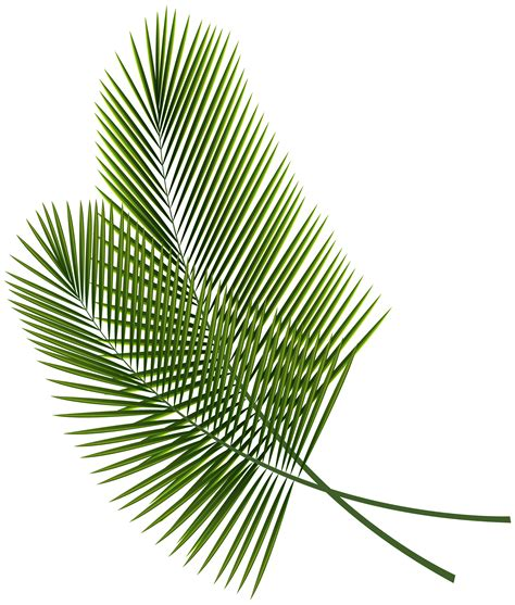 tropical pattern png tropical leaves png clipart image gallery yopriceville