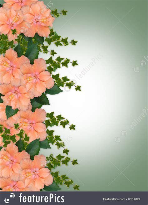 Illustration Of Hibiscus Peach Floral Border