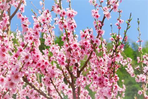 giardini di marzo significato hanakotoba un fiore per ogni giorno marzo the