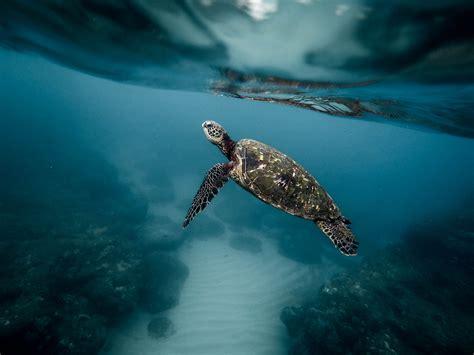 sea animal 2 free images water animal diving wildlife