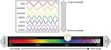 what color has the wavelength the light dependent reactions of photosynthesis