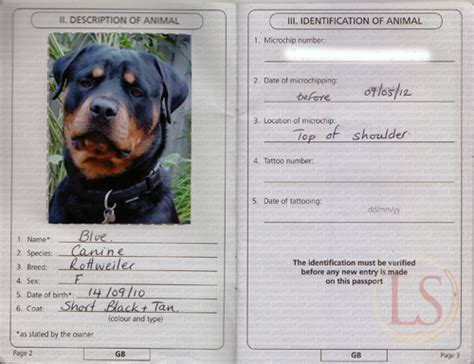 puppy passport how easy is it to take your to