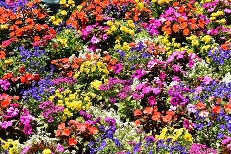 flower garden festival epcot flower and garden festival y