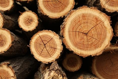 tree ring the lesson of the tree rings meridian magazine