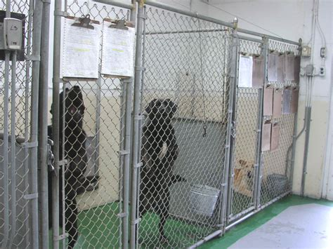 boarding a puppy boarding and cat boarding kennel ma day care wintergreen kennels