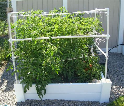 Square Foot Gardening Tomatoes square foot gardening august tomatoes 1 great garden