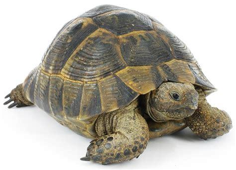 Stork On Tortoise Snake D1816bzgs level 1 animals memrise