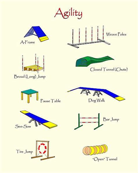 agility course best 25 agility ideas on agility agility for