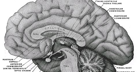 ode to the brain positiveneuro notes of an anesthesioboist the eloquent brain