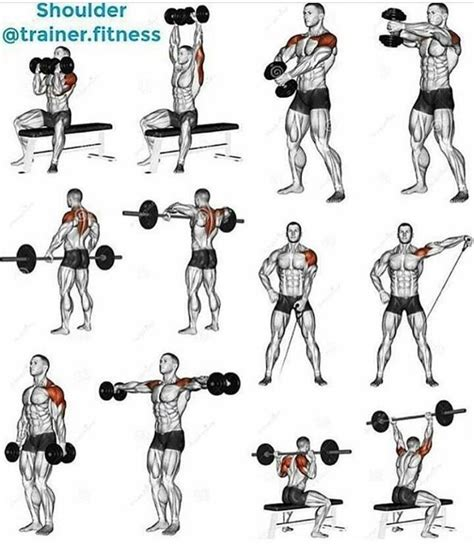best 25 deltoid workout ideas on shoulder