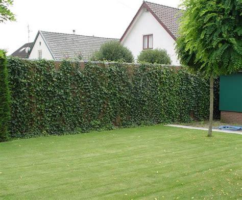 greenscreen fencing livingreen design esi external works