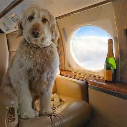 instagram dogs these rich dogs from instagram a more extravagant lifestyle than most