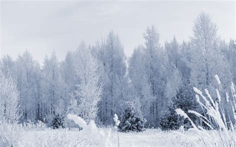 photos of snow after snowfall 2560 x 1600 forest photography