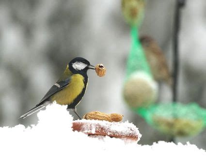 is bread good for birds
