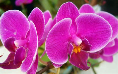 wallpaper hd widescreen high quality desktop flower beautiful pink flowers wallpaper high definition high